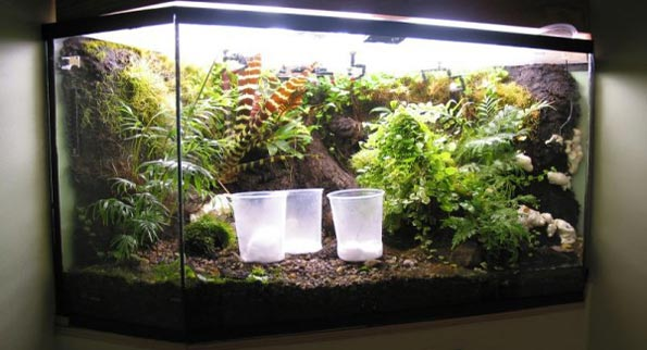 Tired Of The Aquarium How About A Vivarium For Your Home The